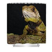 Bocourts Dwarf Iguana Choco Rainforest Shower Curtain