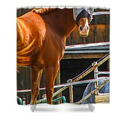 Bode In Disguise Shower Curtain