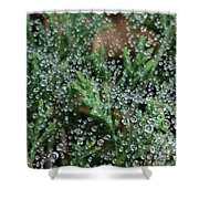 Boiling Point Shower Curtain