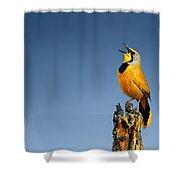 Bokmakierie Bird Calling Shower Curtain