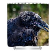 Bold And Demanding Raven Shower Curtain