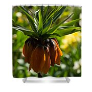 Bold And Showy Orange Crown Imperial Flower  Shower Curtain