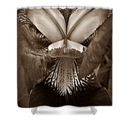 Bold Iris Sepia Shower Curtain