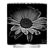 Bold Monochrome Daisy Shower Curtain