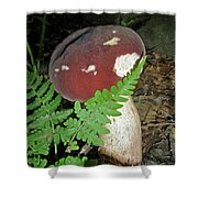 Bolete Mushroom And Fern Shower Curtain