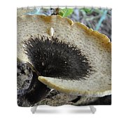 Dryad's Saddle Polyporus Squamosus Shower Curtain