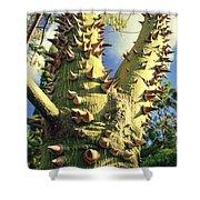 Bombacaceae - Floss Silk Tree - Chorisia Speciosa Hawaii Shower Curtain