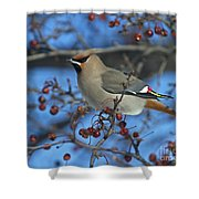 Bombycilla Garrulus... Shower Curtain