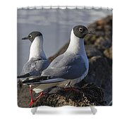 Bonaparts Gull's Shower Curtain