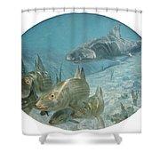 Bonefish Pursued By A Shark, 1972 Shower Curtain