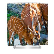 Bongo Mother And Calf Shower Curtain