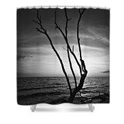 Bonita Beach Tree Black And White Shower Curtain