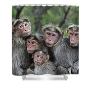 Bonnet Macaques Huddling Western Ghats Shower Curtain
