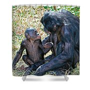 Bonobo Adult Talking To Juvenile Shower Curtain