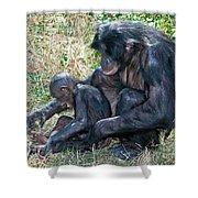 Bonobo Adult Tickeling Juvenile Shower Curtain