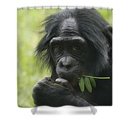 Bonobo Eating Shower Curtain