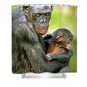 Bonobo Pan Paniscus Mother And Infant Shower Curtain