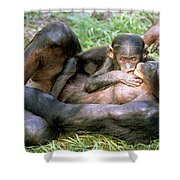 Bonobos Shower Curtain