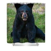 Boo-boo The Little Black Bear Cub Shower Curtain