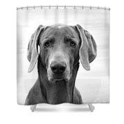 Published Book Cover Of Quotable Dogs  Shower Curtain