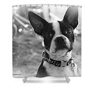 Boomer Boston Terrier Shower Curtain