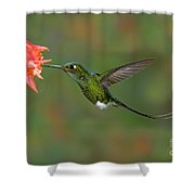 Booted Racket-tail Hummingbird Shower Curtain