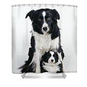Border Collie Dog & Puppy Shower Curtain