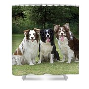 Border Collie Dogs Shower Curtain