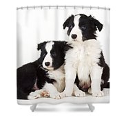 Border Collie Dogs, Two Puppies Shower Curtain