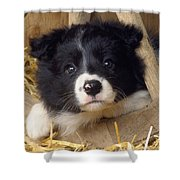Border Collie Puppy And Wooden Wheel Shower Curtain