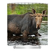 Boreal King Shower Curtain