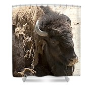 Bored Buffalo Shower Curtain