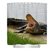 Boring And Yawning Shower Curtain