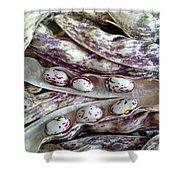 Borlotti Beans - Freshly Picked Shower Curtain