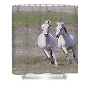 Lipizzaner Stallions Shower Curtain