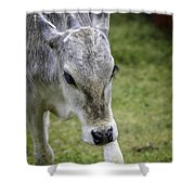 Born To Flirt Shower Curtain