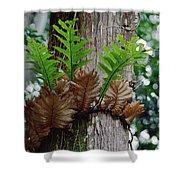 Borneo Fern A Primitve Ant Plant Shower Curtain