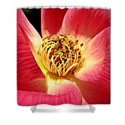 Borrowed Rose Shower Curtain