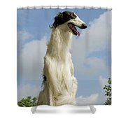 Borzoi Or Russian Wolfhound Shower Curtain