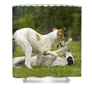 Borzoi Puppies Playing Shower Curtain