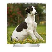 Borzoi Puppy Shower Curtain