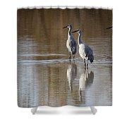 Bosque Del Apache Cranes Shower Curtain