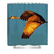 Bosque Del Apache Sandhill Crane Golden Light Shower Curtain