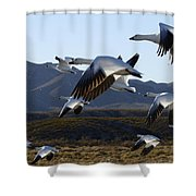 Bosque Del Apache Snow Geese In Flight Shower Curtain by Bob Christopher