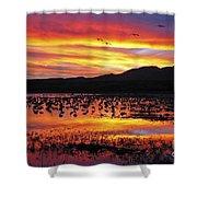 Bosque Sunset II Shower Curtain