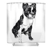 Boston Bull Terrier Shower Curtain