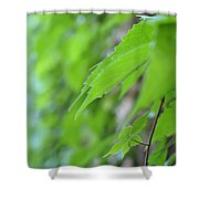 Boston Ivy Bokeh Shower Curtain