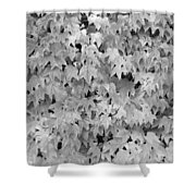 Boston Ivy In Monochrome Shower Curtain