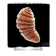 Bot Fly Larva Shower Curtain