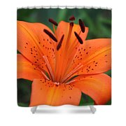 Botanical Beauty 1 Shower Curtain